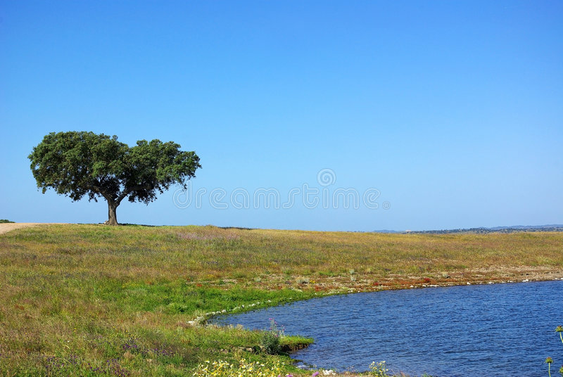Vecchio albero in Alentejo. fotografie stock