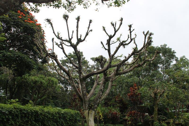 Vecchio albero in mezzo ad un giardino con il cielo nuvoloso fotografia stock libera da diritti