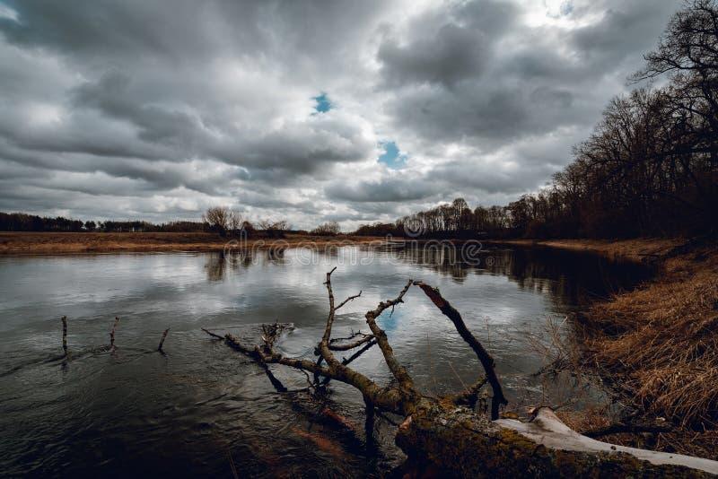 Vecchio albero rotto che mette sull'acqua di fiume immagine stock libera da diritti