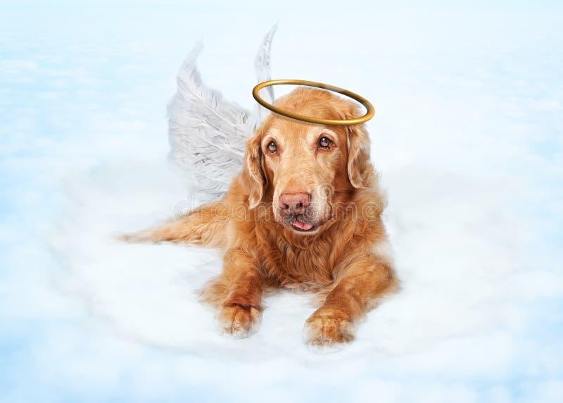 Vecchio angelo del cane sulla nuvola nel cielo fotografia stock libera da diritti