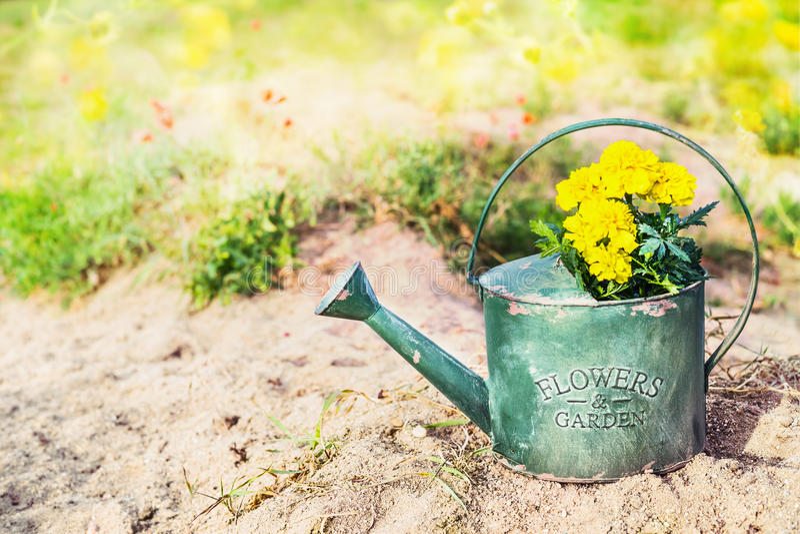 Vecchio annaffiatoio con i fiori in giardino fotografia - Annaffiatoio da giardino ...