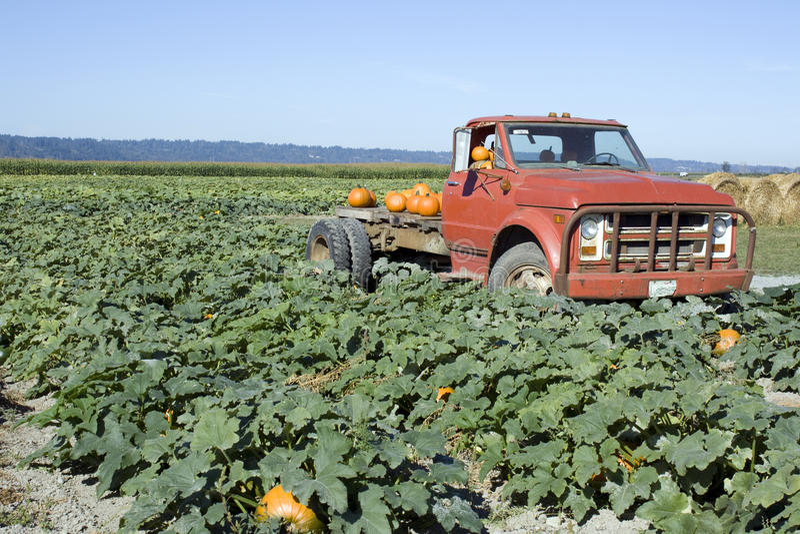 Vecchio camion all'azienda agricola della zucca immagini stock
