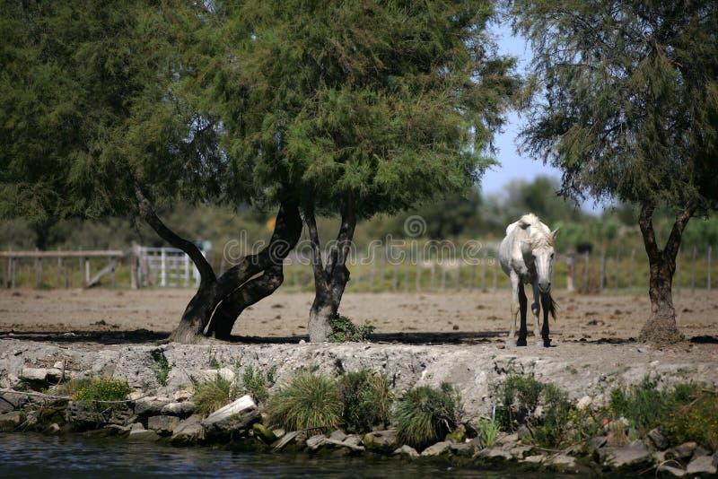 Vecchio cavallo immagini stock libere da diritti