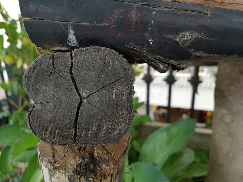 Vecchio ceppo di albero marcio, umore di autunno immagine stock libera da diritti