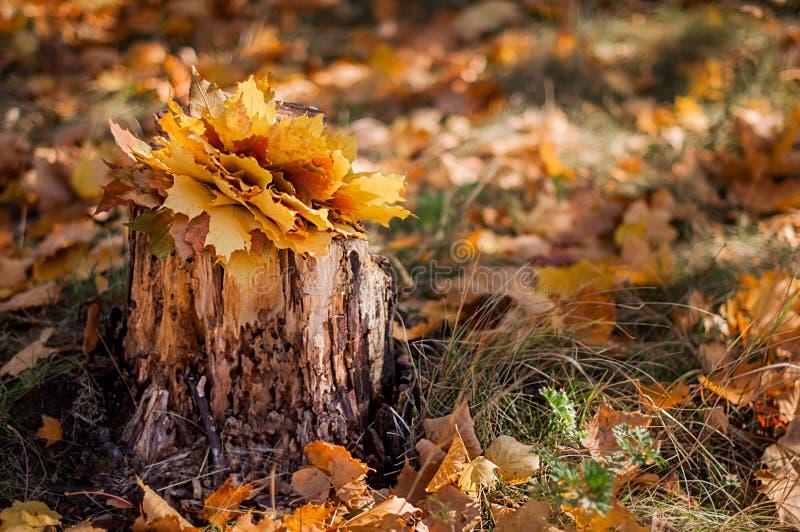 Vecchio ceppo nella foresta di autunno immagine stock