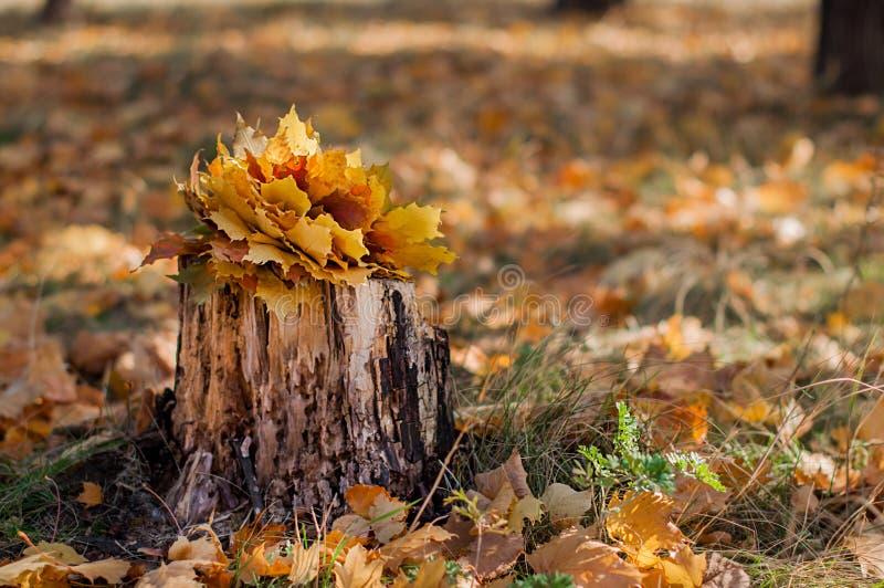 Vecchio ceppo nella foresta di autunno fotografia stock libera da diritti