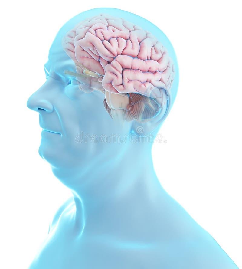 Vecchio cervello dei tipi illustrazione di stock