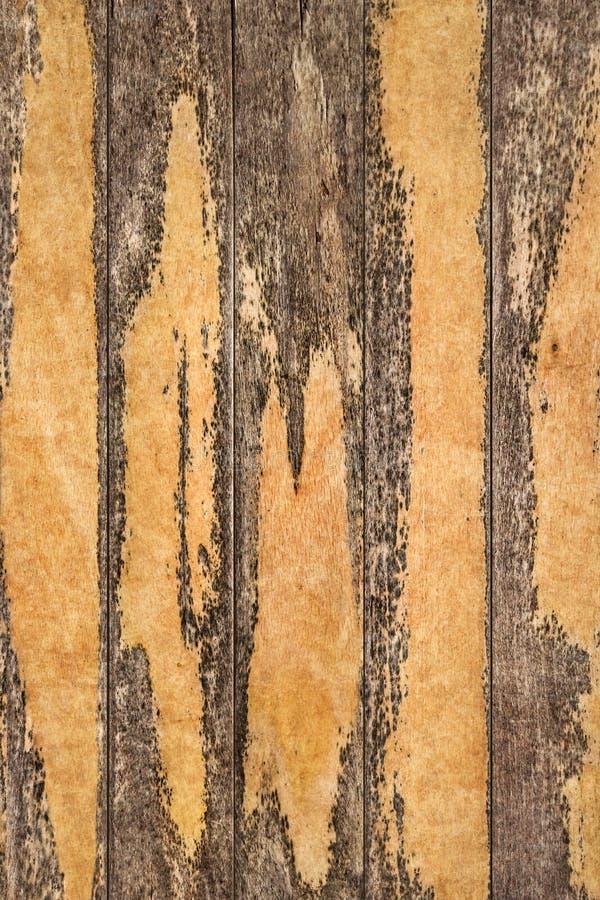 Vecchio dettaglio approssimativo annodato incrinato marcio stagionato di struttura di lerciume delle plance di Pinewood immagine stock libera da diritti