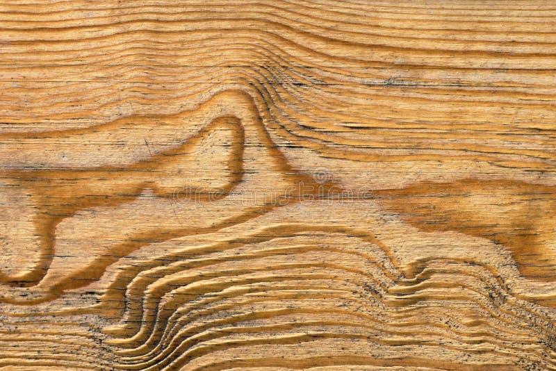 Vecchio dettaglio verniciato annodato stagionato di struttura di lerciume della plancia di Pinewood immagine stock libera da diritti