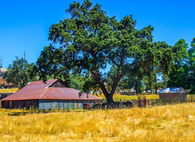 Vecchio di legno & Tin Barn Under Oak Tree fotografia stock libera da diritti