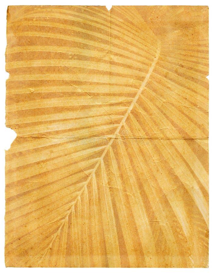 Vecchio documento con foglia di palma strutturata violenta pagina royalty illustrazione gratis