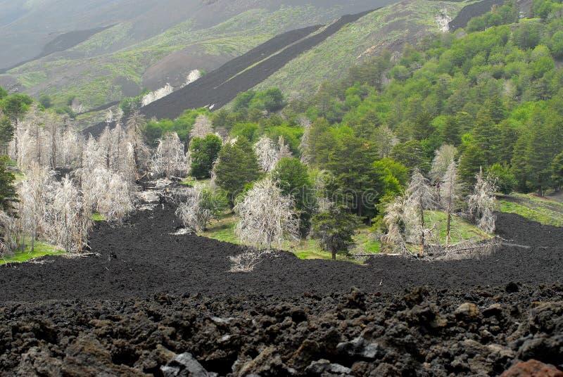 Vecchio flusso di lava, sui pendii del vulcano Etna, immagini stock