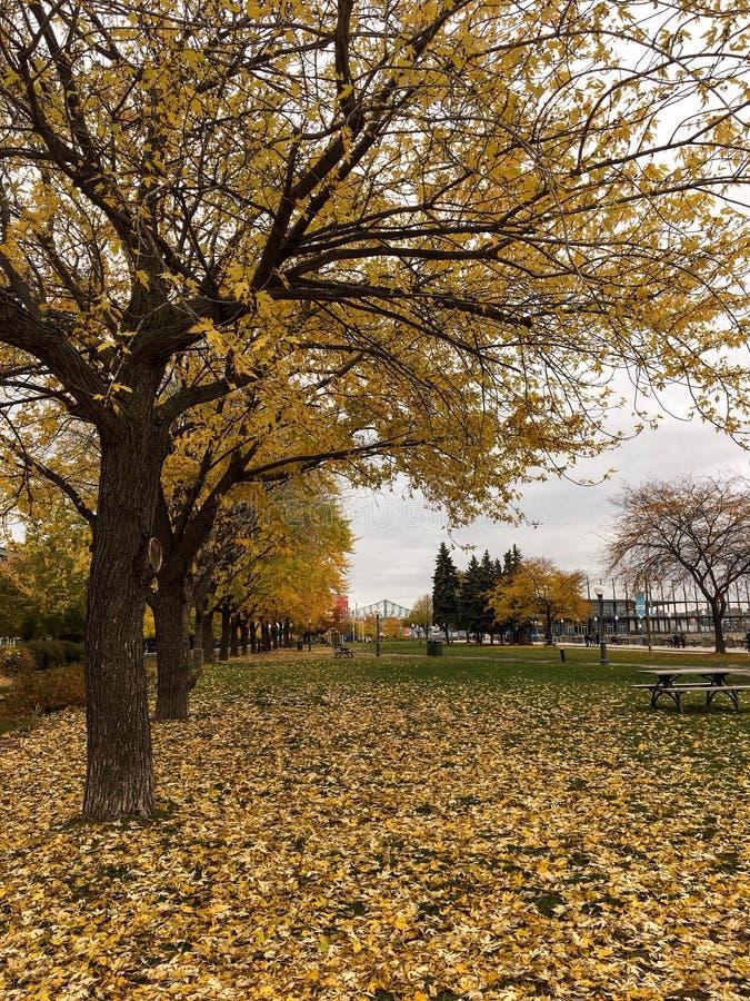 Vecchio fogliame di Montreal immagini stock libere da diritti