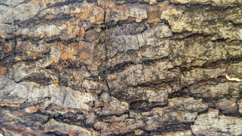 Vecchio fondo di legno asciutto del pezzo fotografia stock