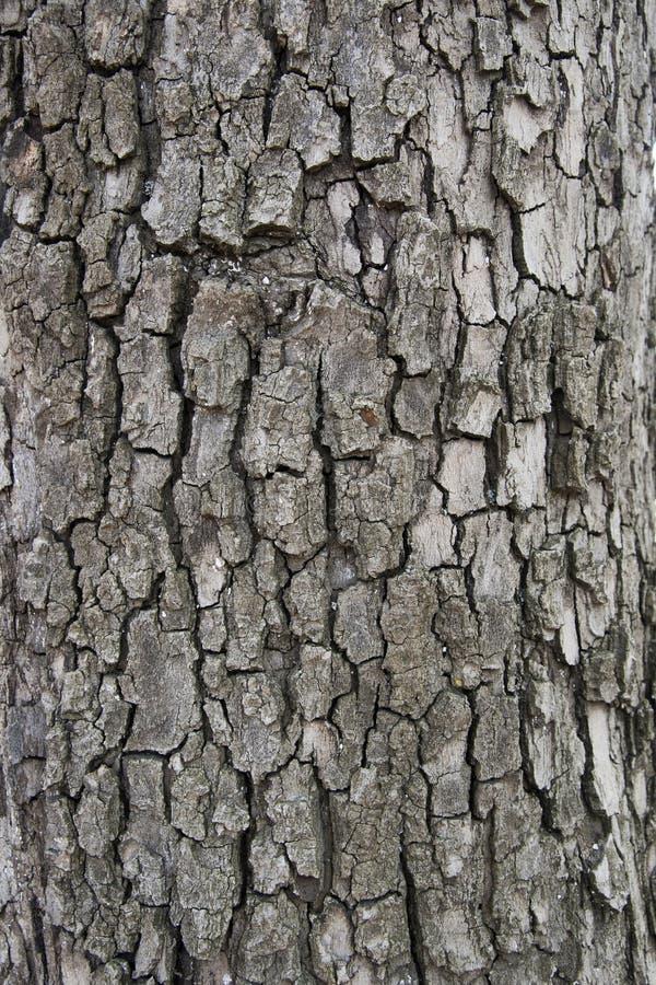 Vecchio fondo di legno di struttura della corteccia con le crepe per progettazione immagine stock libera da diritti