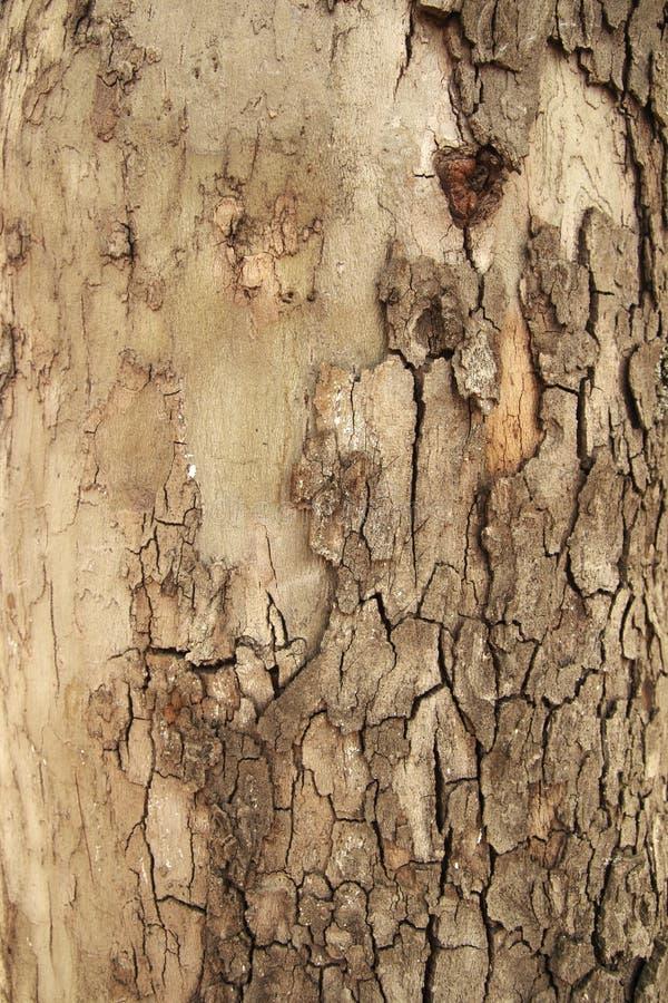 Vecchio fondo di legno di struttura della corteccia con le crepe per progettazione fotografie stock libere da diritti