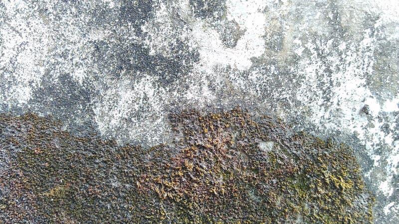 Vecchio fondo sporco della parete del cemento di lerciume con muschio asciutto immagini stock libere da diritti