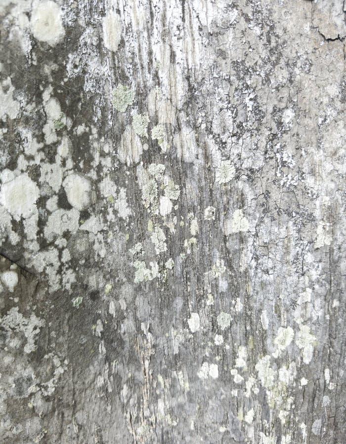 Vecchio gambo TG dell'albero immagine stock libera da diritti
