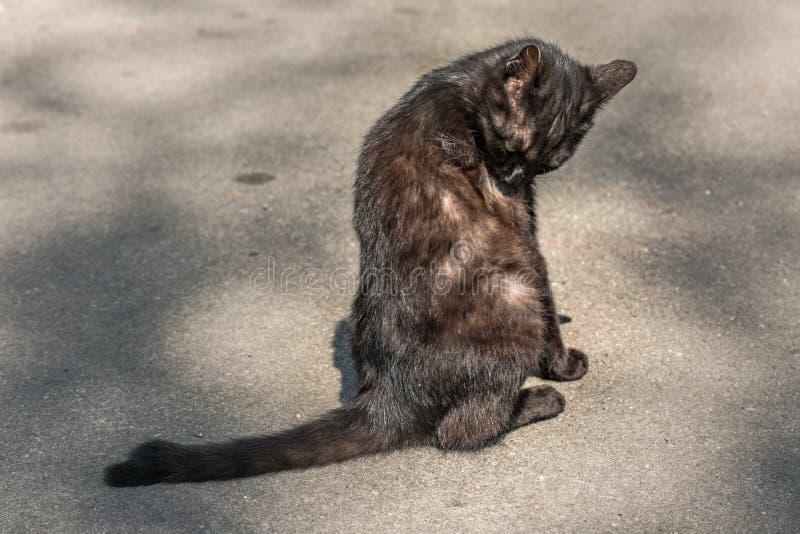 Vecchio gatto nero adorabile nel parco fotografie stock libere da diritti