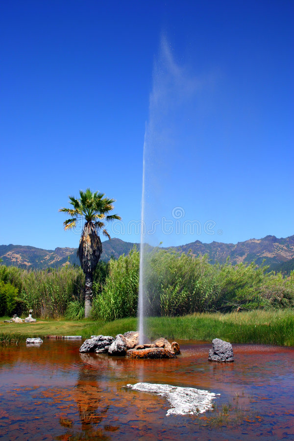 Vecchio geyser fedele del Calistoga, California fotografia stock