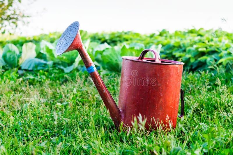 Vecchio giardino dell'annaffiatoio del metallo sull'erba verde intenso immagine stock libera da diritti