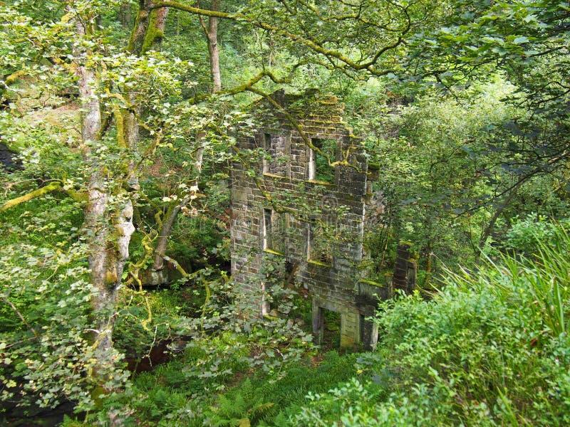 Vecchio ha abbandonato la casa di pietra in una foresta invasa con vegetazione e nascosta dagli alberi e dai rami fotografia stock libera da diritti