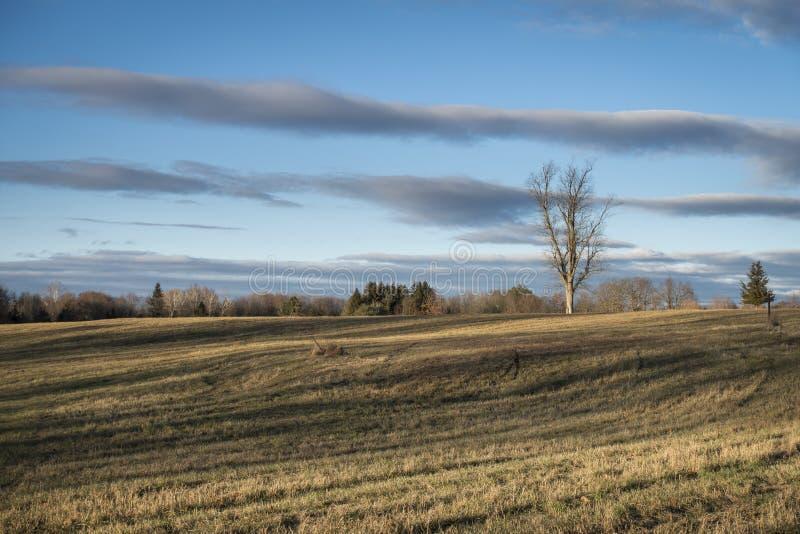Vecchio Hayfield nell'inverno con le nuvole e le ombre drammatiche immagini stock libere da diritti