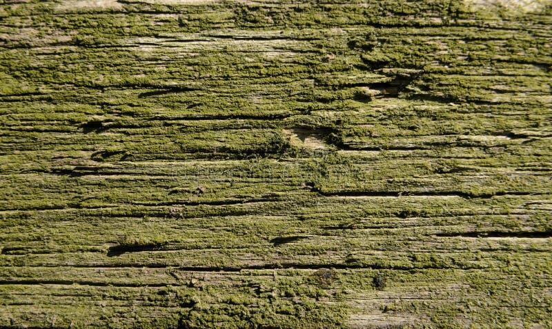 vecchio legno coperto di muschio verde fotografia stock libera da diritti