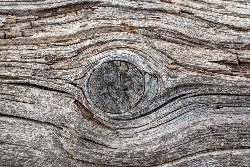 Vecchio legno sbiadito con un fondo di struttura del nodo per il modello o modello di progettazione in una costruzione, in un ali immagini stock