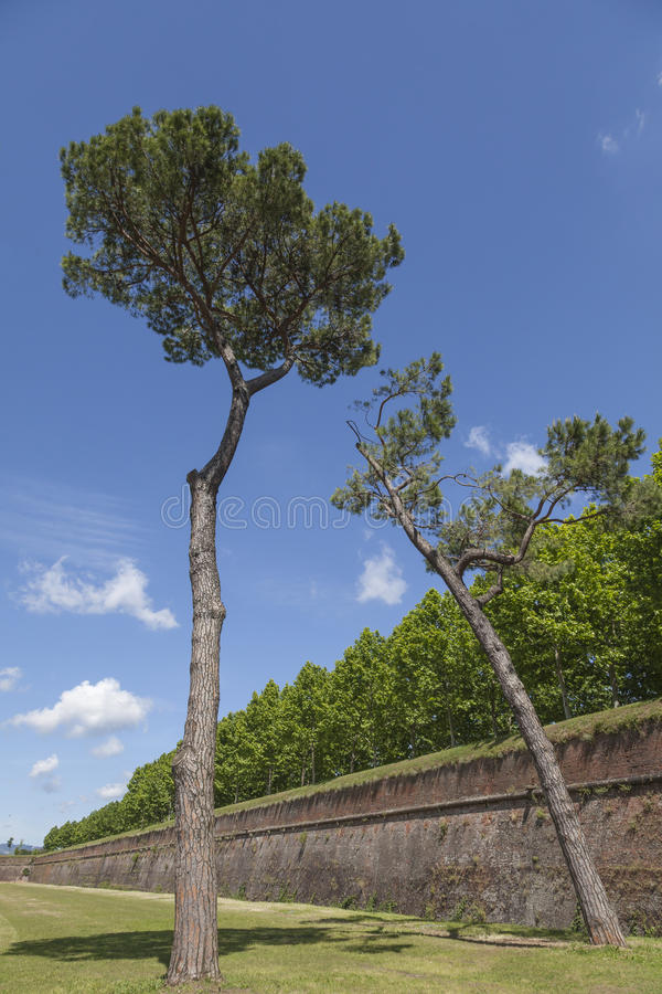 Vecchio muro di cinta da Lucca, Toscana, Italia fotografia stock libera da diritti