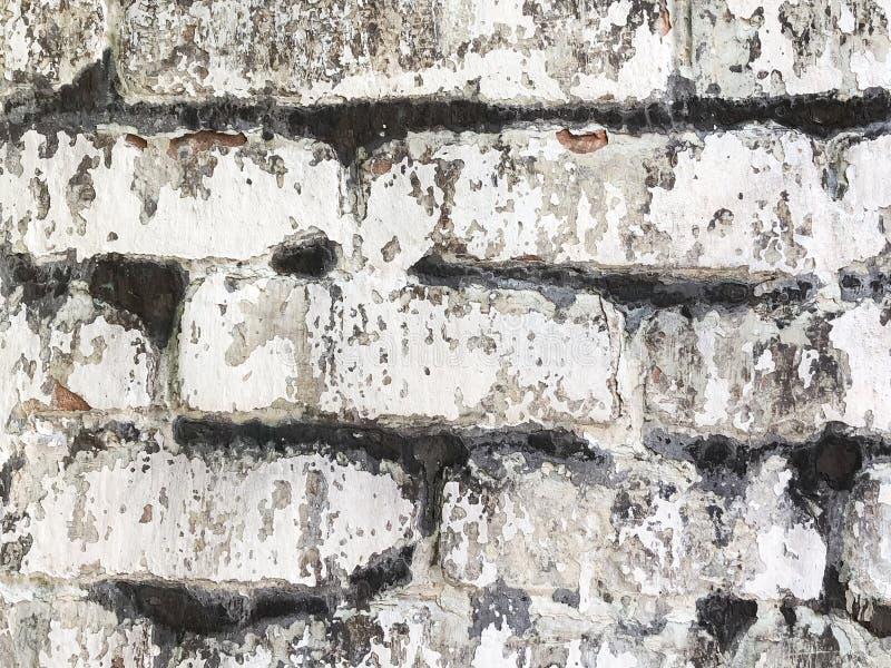 Muffa nera su una parete bianca immagine stock immagine for Parete attrezzata bianca e nera