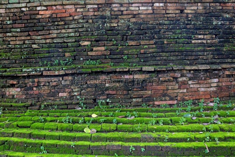 Vecchio muro di mattoni concreto con muschio fotografie stock libere da diritti