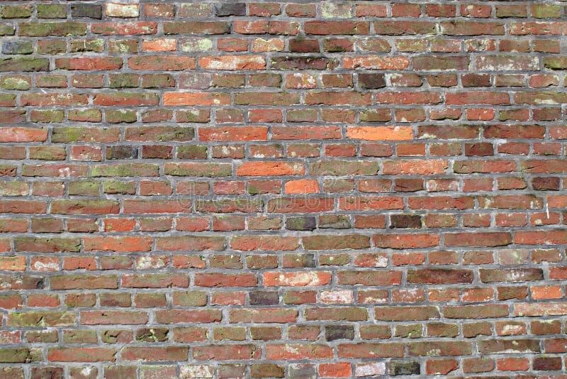 Vecchio muro di mattoni variopinto fotografia stock