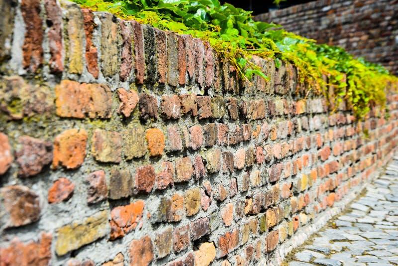 Vecchio muro di mattoni via urbana di lerciume vuoto muro di mattoni di variopinto immagine stock libera da diritti