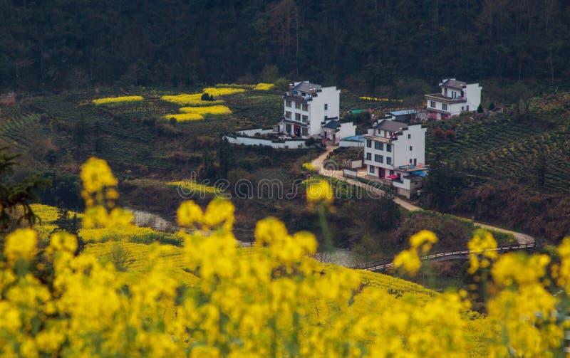 Vecchio paesaggio antico cinese della casa della valle in montagna con i fiori, nell'Anhui, la Cina immagini stock
