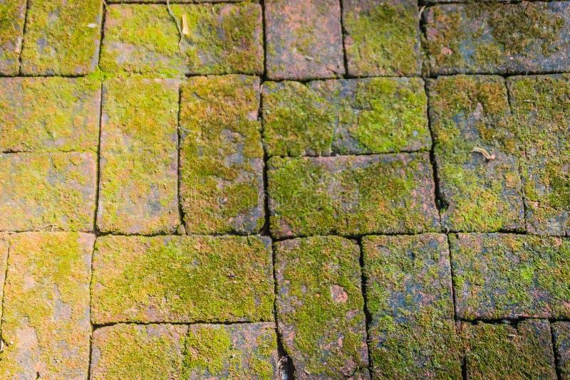 Vecchio pavimento di pietra invaso con muschio verde Muro di mattoni con crescita del muschio e dell'erba che forma bello struttu fotografie stock libere da diritti