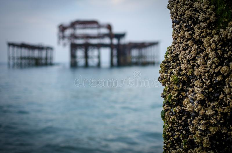 Vecchio pilastro fuori bruciato a Brighton, Inghilterra immagini stock