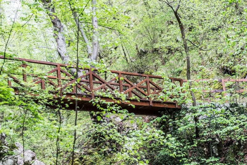 Vecchio ponte di legno in foresta profonda, fondo d'annata naturale fotografie stock libere da diritti