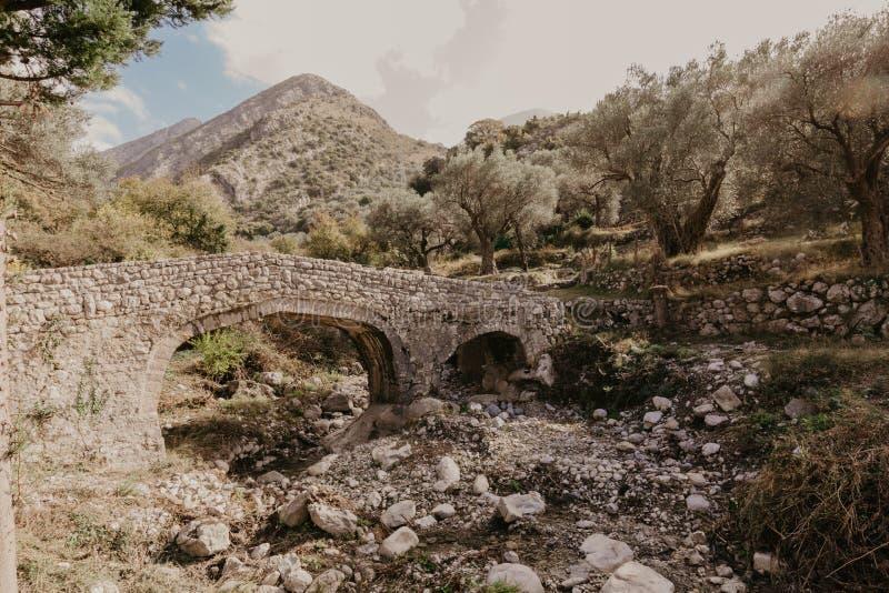 Vecchio ponte di pietra che conduce all'oliveto immagine stock libera da diritti