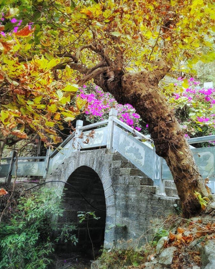 Vecchio ponte di pietra nel colore di caduta immagini stock libere da diritti