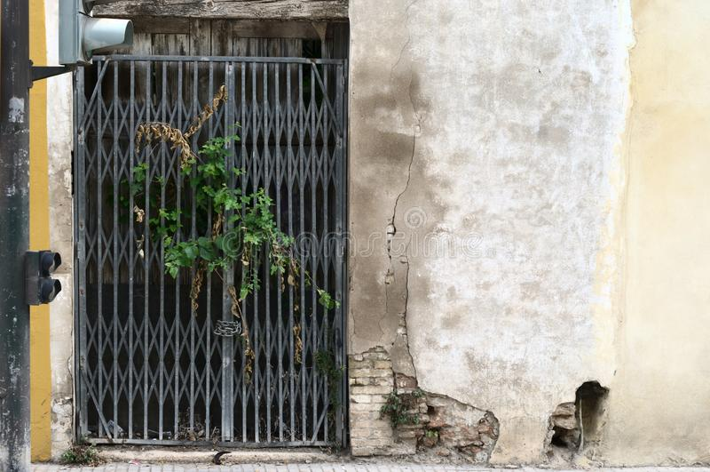 Vecchio portale della casa con vegetazione che esce dai portoni fotografia stock