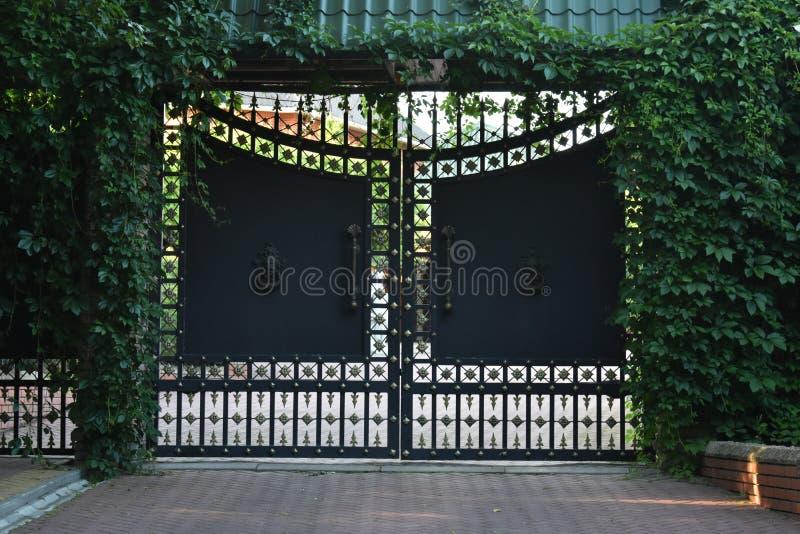 Vecchio portone e recinto dell'ornamento del ferro invasi con il Parthenocissus verde fotografia stock