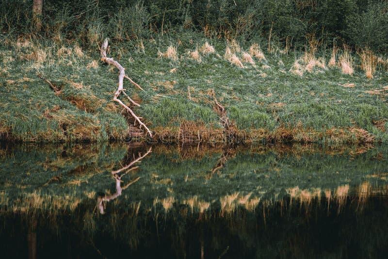 Vecchio ramo di albero rotto e la sua riflessione nel fiume fotografia stock libera da diritti