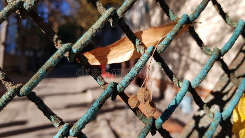 Vecchio recinto arrugginito sporco della rete metallica con pittura di pelatura blu fotografia stock