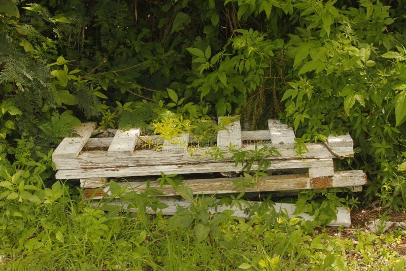 Vecchio recinto di legno che ottiene coperto di crescita eccessiva immagini stock libere da diritti