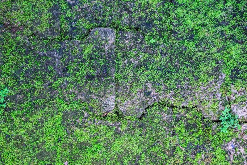 Vecchio retro blocchetto d'annata strutturato invecchiato dettagliato primo piano del mattone con la pianta verde di vita sul bac immagine stock