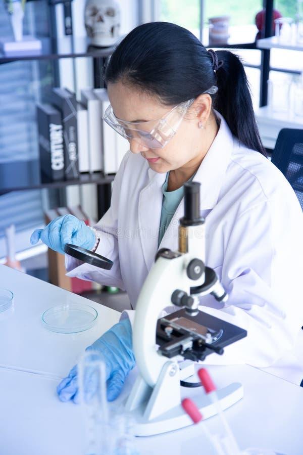 Vecchio sguardo dello scienziato della donna dell'Asia sebbene lente d'ingrandimento alla capsula di Petri in laboratorio a seriu immagini stock