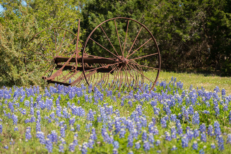 Vecchio strumento d'agricoltura in fiori del Bluebonnet fotografia stock libera da diritti
