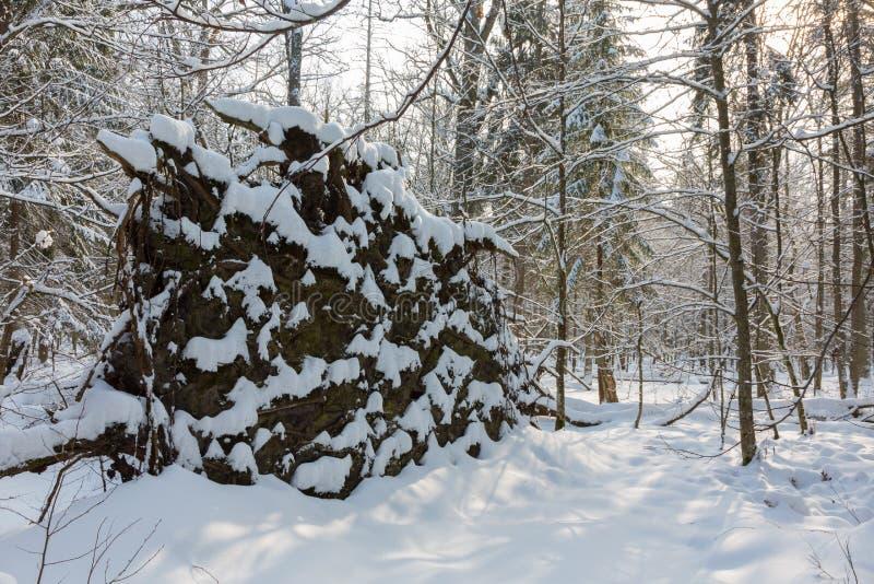 Vecchio supporto naturale con l'albero rotto vento immagine stock