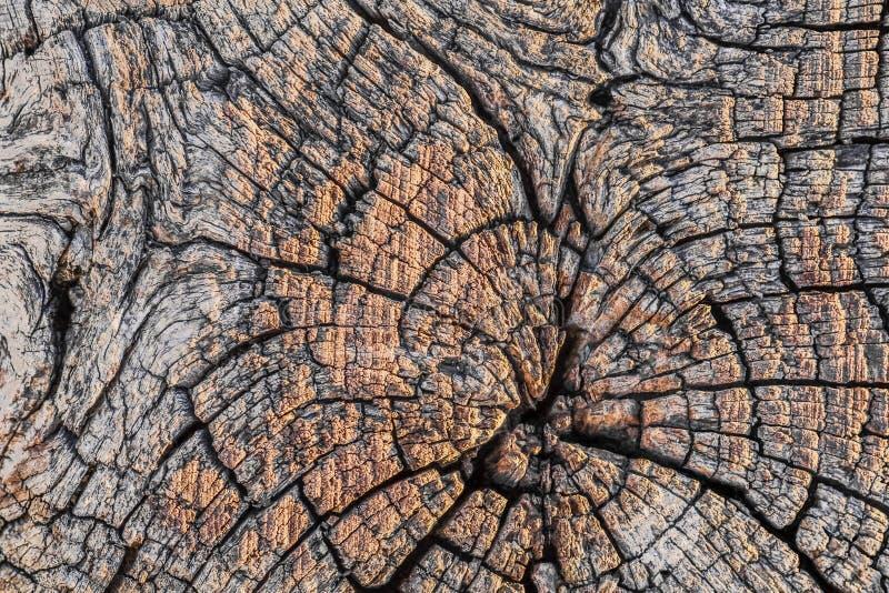Vecchio testo di legno incrinato stagionato della superficie di sezione trasversale della traversina fotografia stock libera da diritti